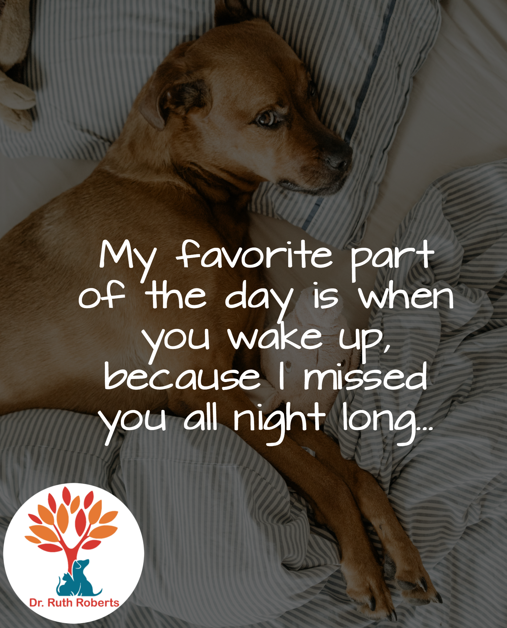 My Favorite Part Of The Day Is When You Wake Up Because I Missed You All Night Long Dog Pets Love Animal Quotes Dog Quotes Pets