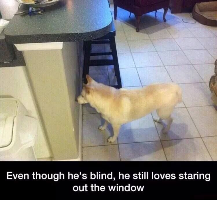 Funny Blind Dog Picture Best Funny Pictures Funny Dogs Dog Mems