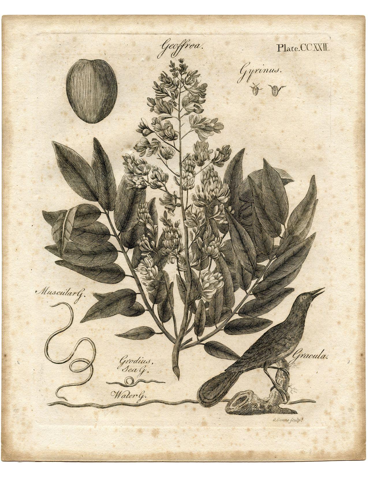 Постер растения ретро