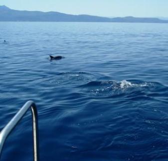dolphin watching tours in the Corinthian Gulf