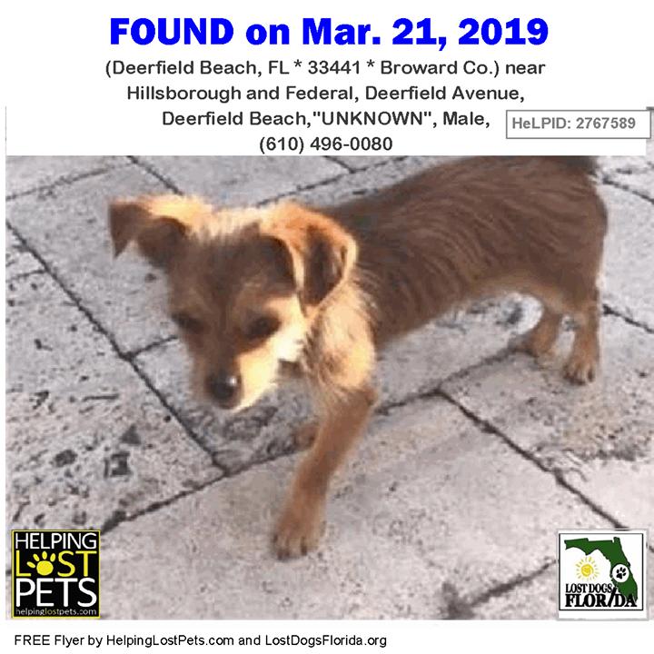 Found Dog Do You Know This Dog Deerfieldbeach Hillsborough Federal Deerfield Avenue Deerfield Beach Fl 33441 Broward Co Losing A Dog Dogs Sweet Dogs