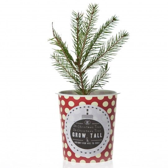 grow your own Christmas tree   Christmas tree kit ...