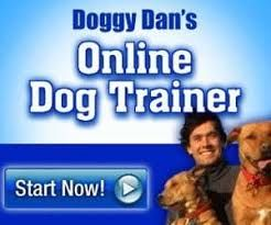 here is an introduction video to a free video based dog