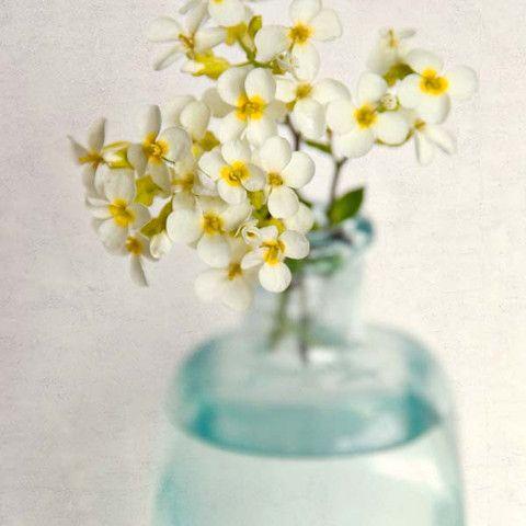 Yellow Rock Cress Flower Photography Print by Allison Trentelman
