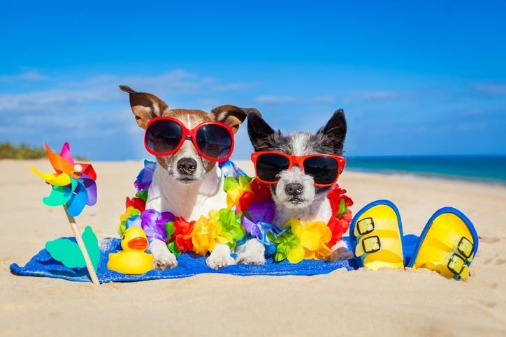 Taking Your Dog To The Beach 9 Tips Every Owner Must Know Pet
