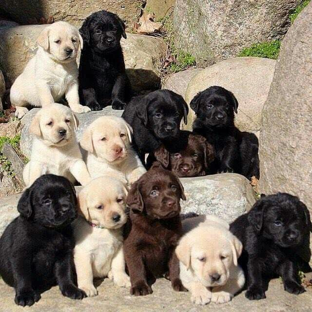 Puppies! From your friends at phoenix dog in home dog