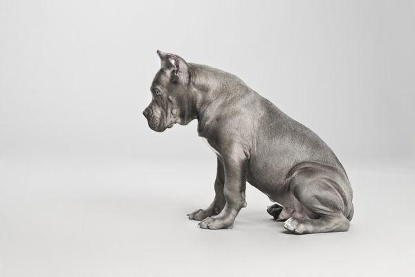 CANIO by Pablo Axpe, via Behance. simplemente genial una serie de fotografías de perros, genial.