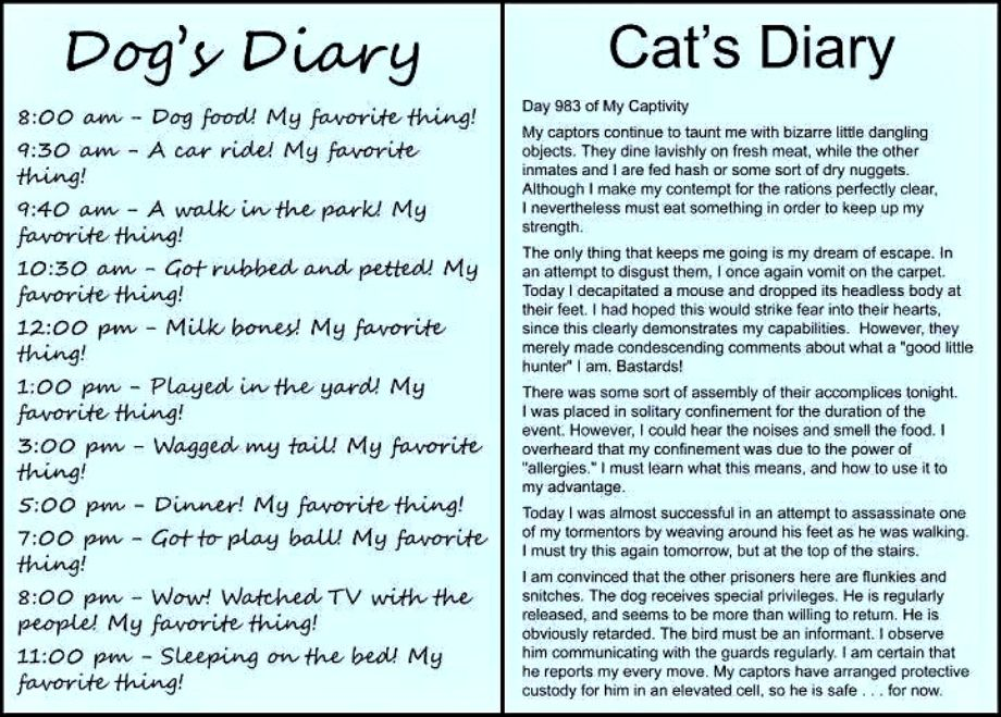 Cats Rule & Dogs Drool Cats v.s. Dogs A Diary Favorite