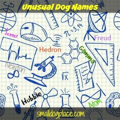need a great name for your dog why not consider an unusual dog name find out more at http smalldogplace com unusual dog names html