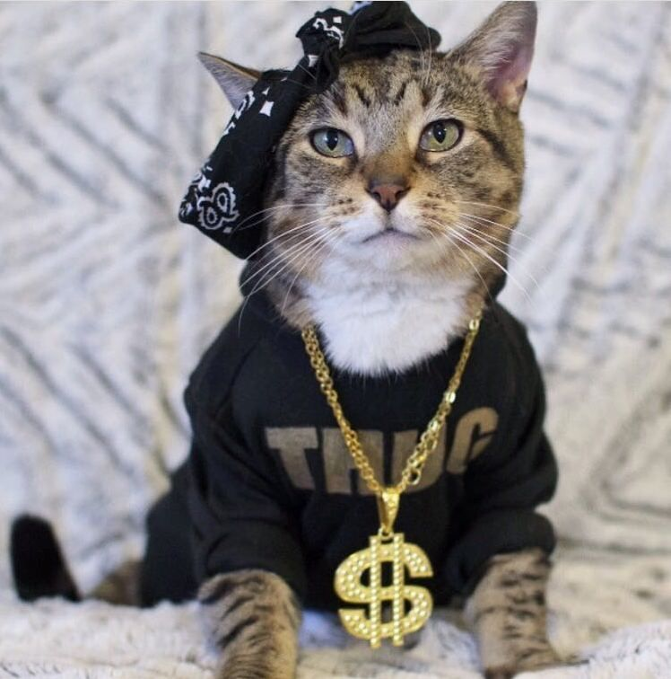 Thug Life Cute Cats Hq Pictures Of Cute Cats And Kittens Free Pictures Of Funny Cats And Photo Of Cute Kittens Cute Cats And Kittens Cats Thug Life Cat