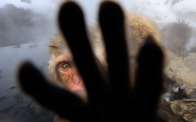 Macacos das Neves