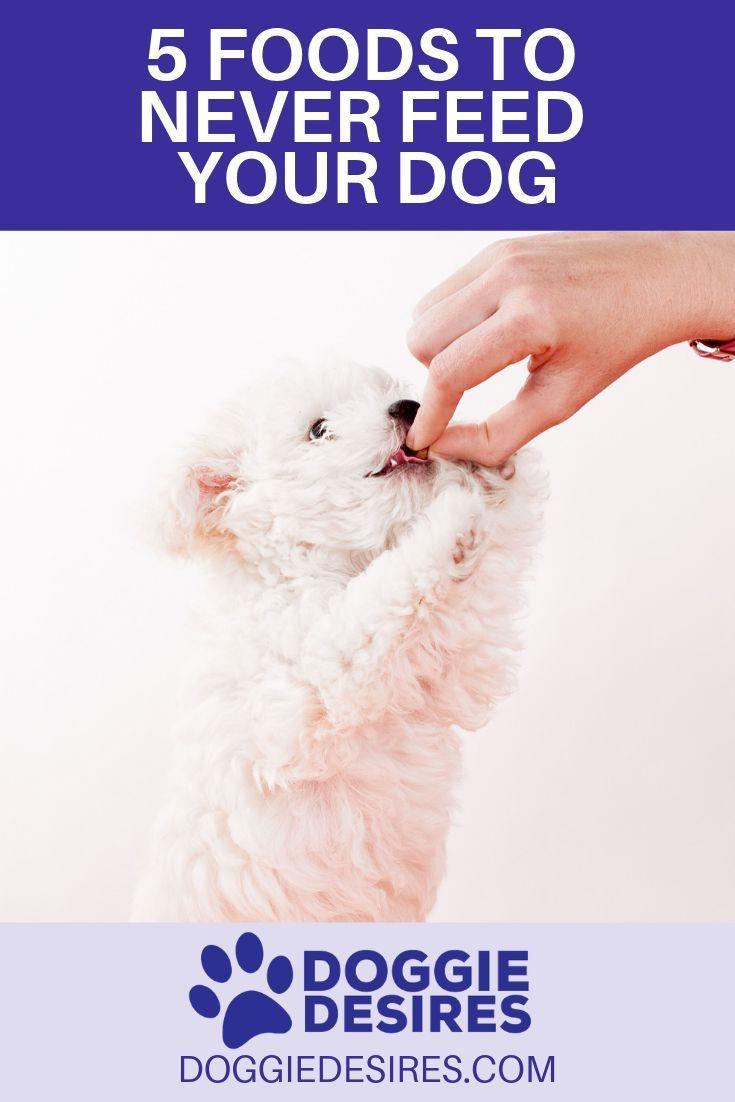 dog won't eat dog food but will eat human food