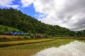 The Global Miller: 06/10/2014: Thailand to cut production of rice and rubber to avoid oversupply