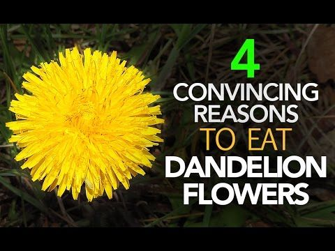 The Health Benefits Of Dandelion Flowers Are Just As Lucrative As The Known Benefits Of The Leaves And Roots The Sweet Flow In 2020 Dandelion Dandelion Flower Flowers