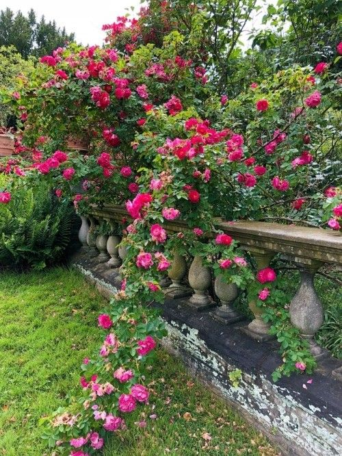 Pin by Jessamy Elvira on Vintage Gardens   Pinterest   Gardens ...