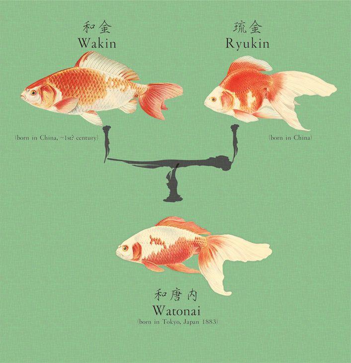 Watonai Goldfish 生き物 イラスト 魚の描き方 イラスト