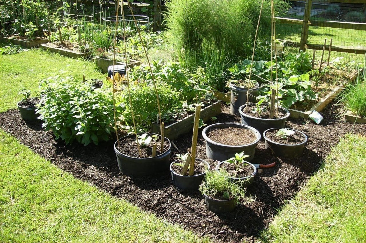 10 Container Vegetable Garden Ideas Most Of The Elegant And Also