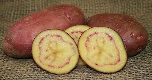 SEED POTATOES  1 lb French Fingerling  Organic Grown  Non GMO  Virus  Chemical Free  Ready for Spring Planting  * Click image for more details.