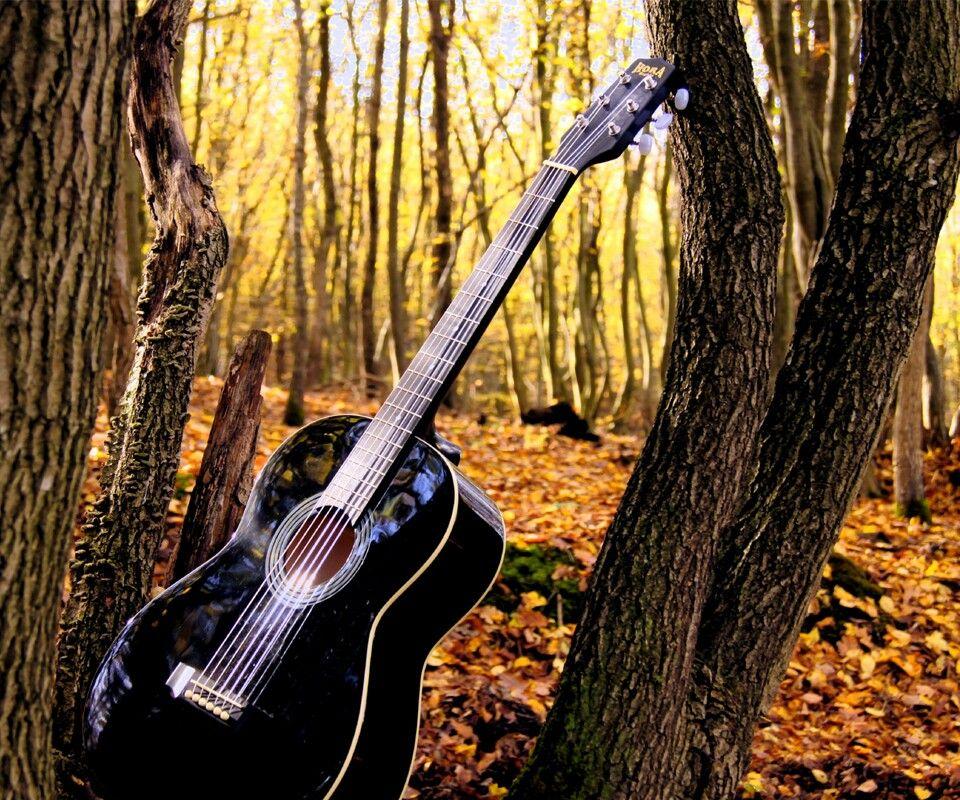 backwoods Music wallpaper, Guitar, Acoustic guitar