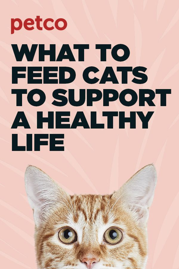 A cat's overall health is tied to their nutrition. Read