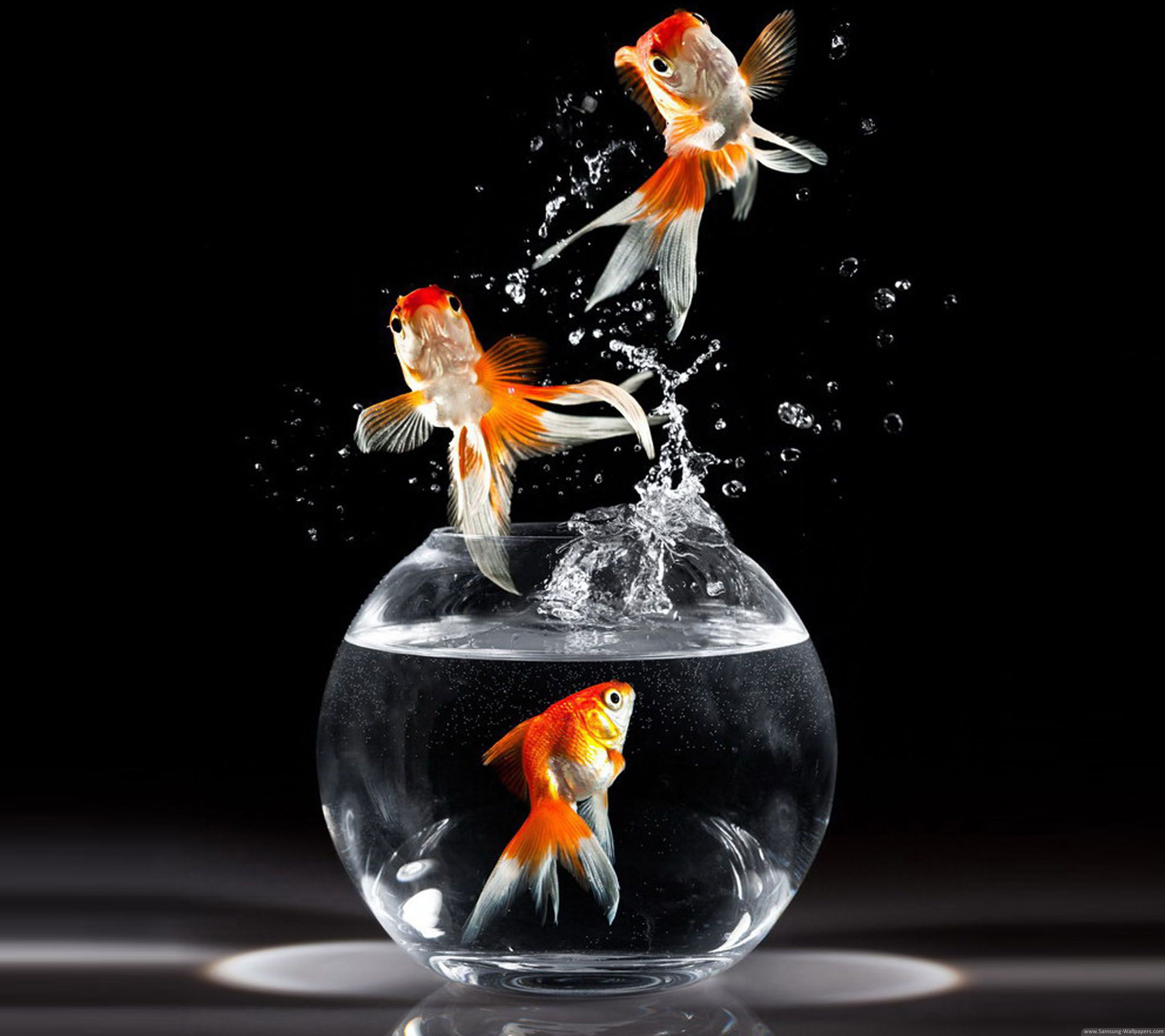 cute goldfish wallpaper Google Search Fish wallpaper