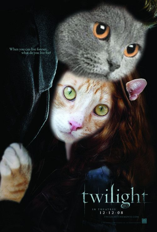 They Have Combined Cats And Twilight Like 4 Years Ago I Love It Cat Movie Cat Posters Cats