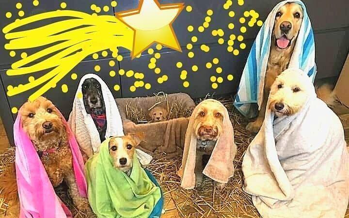 #christmasmood #christmasdecor #christmasnails #christmasday #noel #navidad #natale #cagnolini #dolcezza Christmas