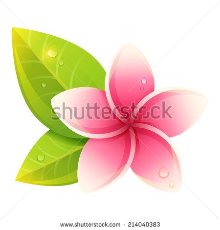 Plumeria Isolated Stock Vectors Vector Clip Art