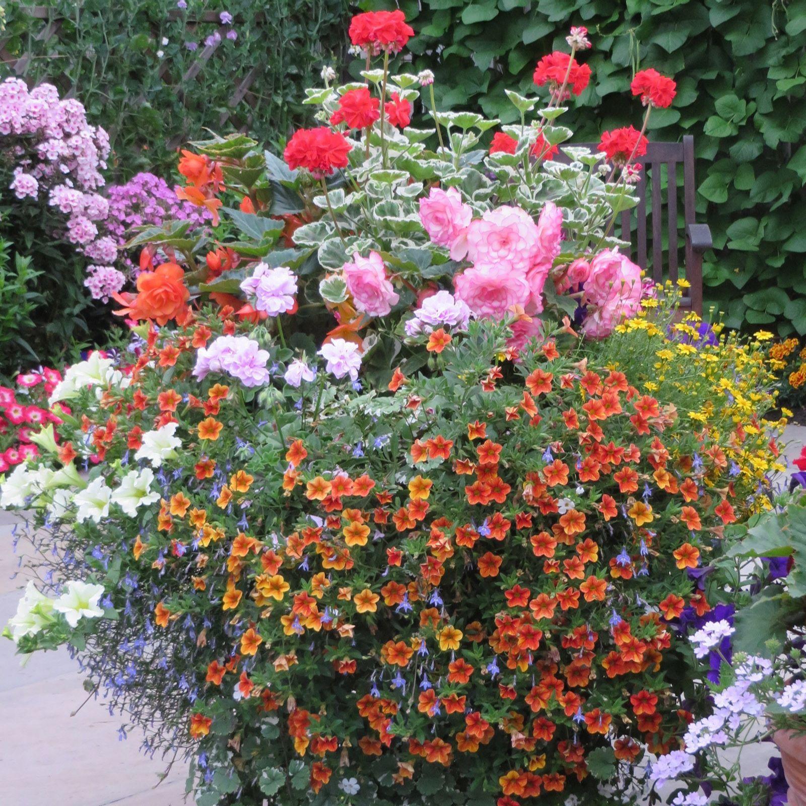 507372 Richard Jackson S 1 6kg Flower Power Premium Plant Food Qvc