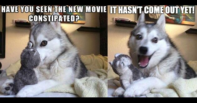 Funny Meme Puns : Meme this sheppies rule meme worst puns and pun husky