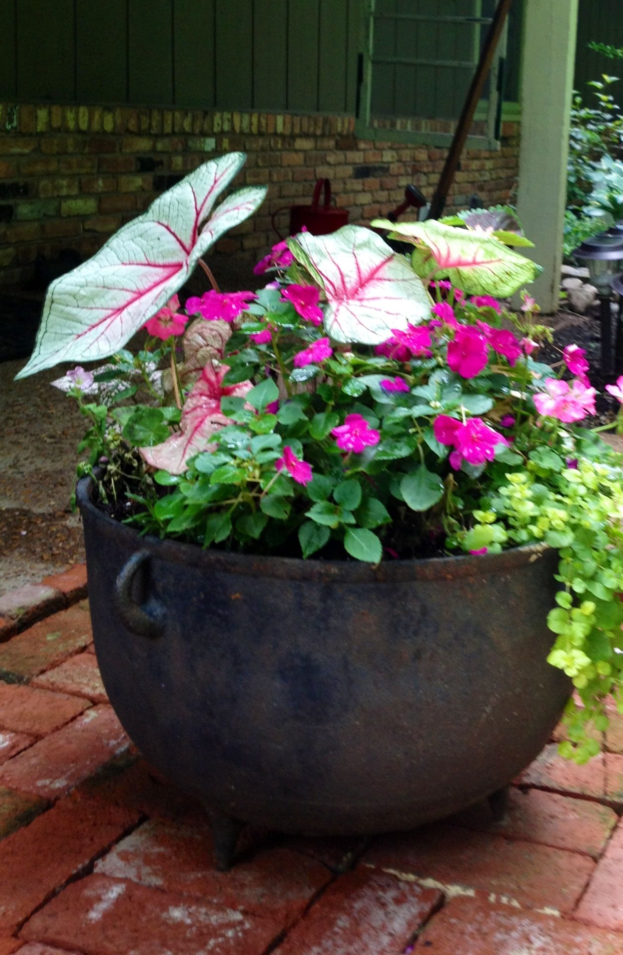 Pin By Maureen Sterner On My Garden Tour Iron Planters Antique Cast Iron Cast Iron Kettle