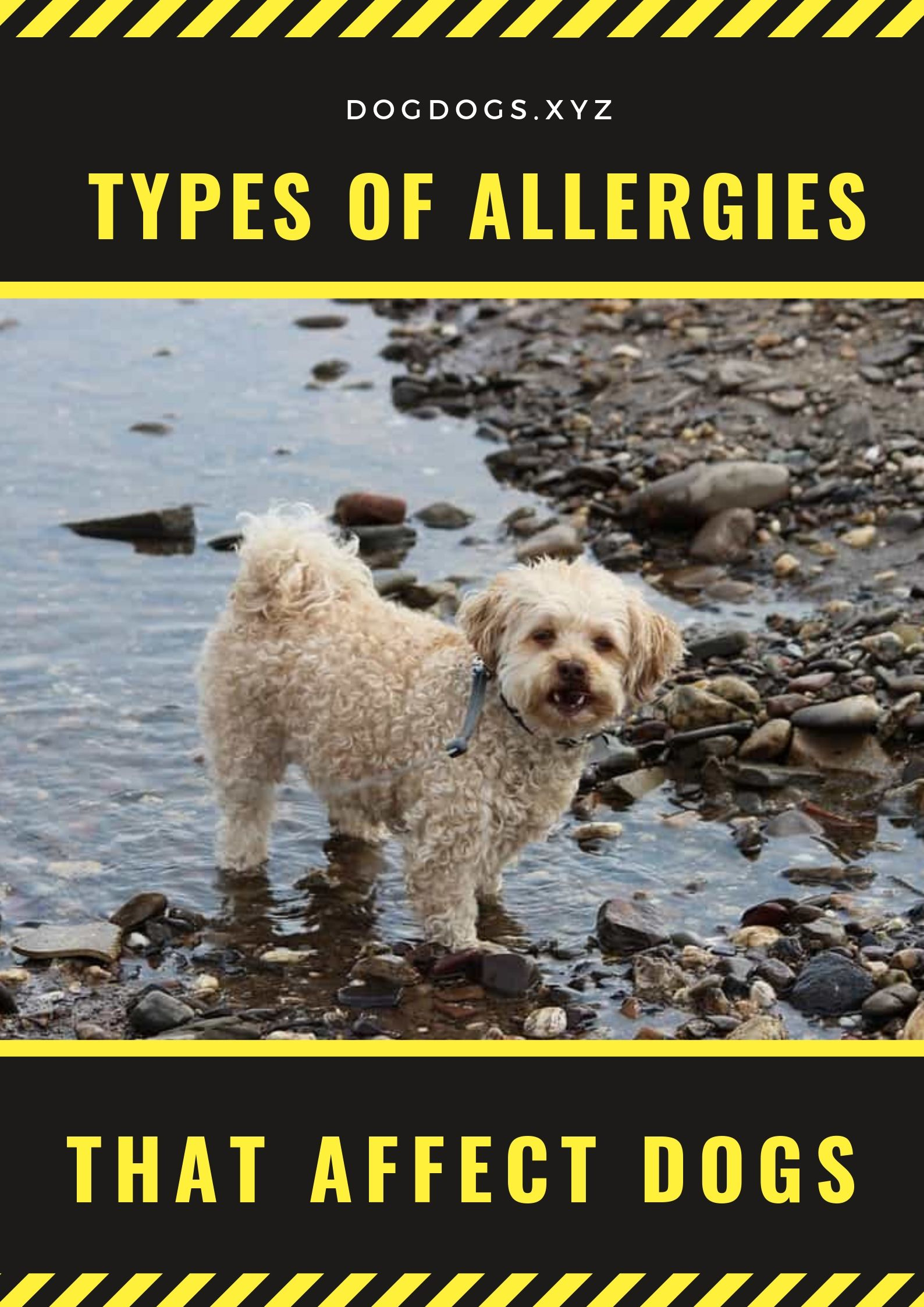 Types Of Allergies That Affect Dogs With Images Dogs Dog Care