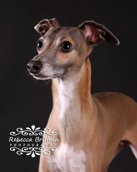 Dog photography in Tampa, Clearwater, Seminole Fl by Rebecca ...