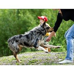 Every Dog Can Learn New Tricks! at Medina County District Library, Highland Branch Medina, OH #Kids #Events