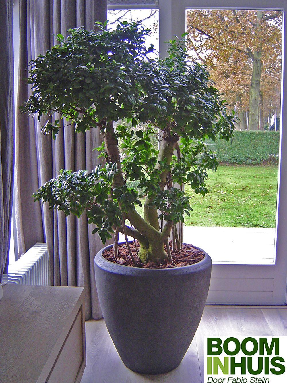 Grote plant in woonkamer wonen pinterest rieten for Grote planten voor binnen