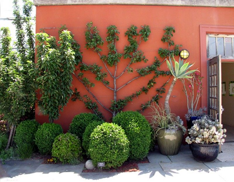 Espalier contre la maison c t jardin et id es a emprunter espalier jardins fruitier - Plante contre l humidite dans la maison ...