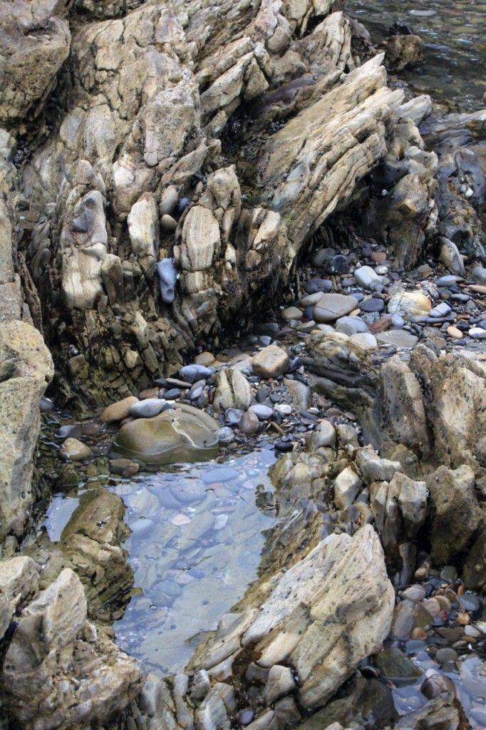 Tide Pools Of Little Corona Del Mar California Adventures