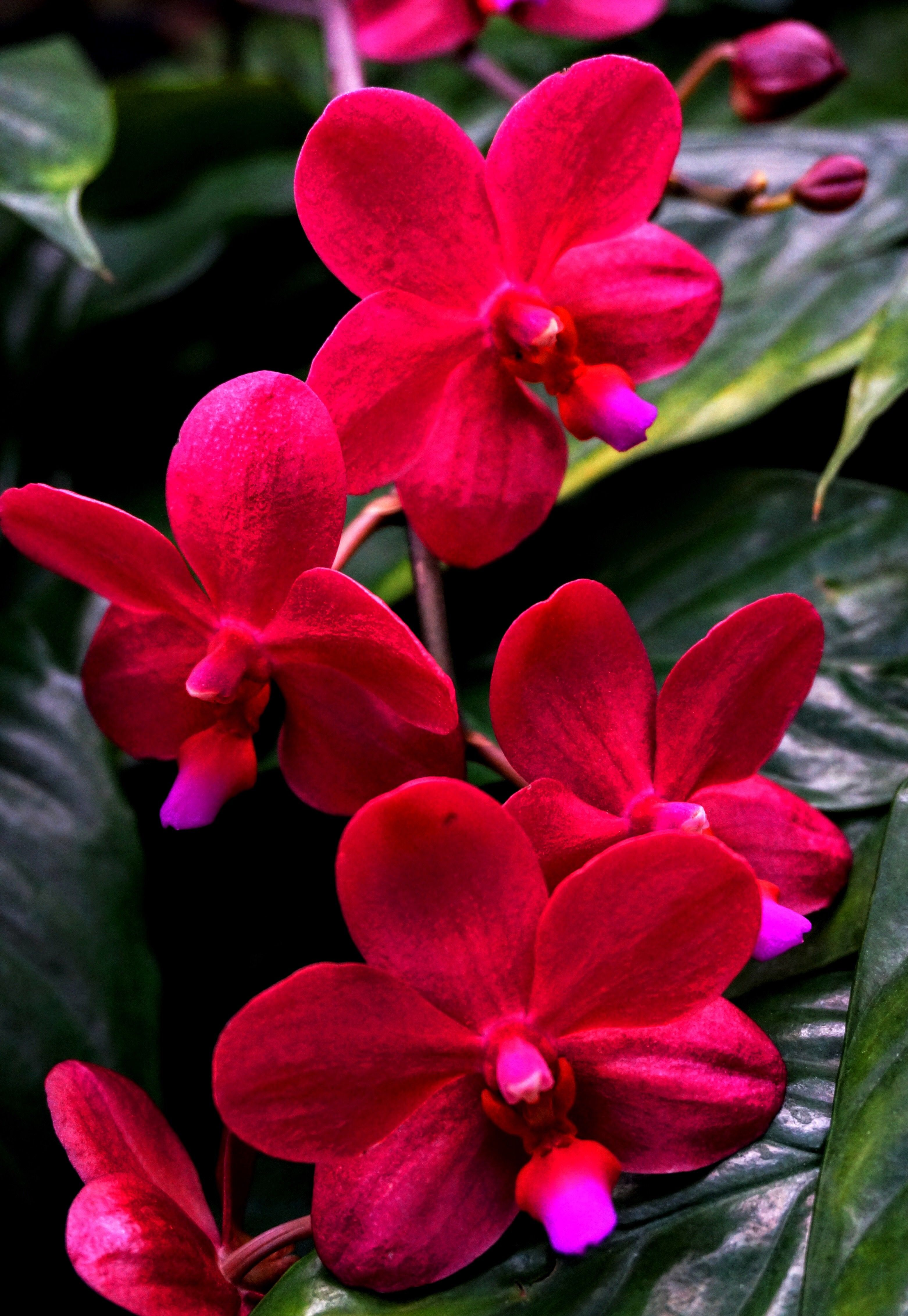 Pin by on pinterest orchid flowers and red flowers exotic flowers beautiful flowers spa therapy blossoms green nature gardening izmirmasajfo