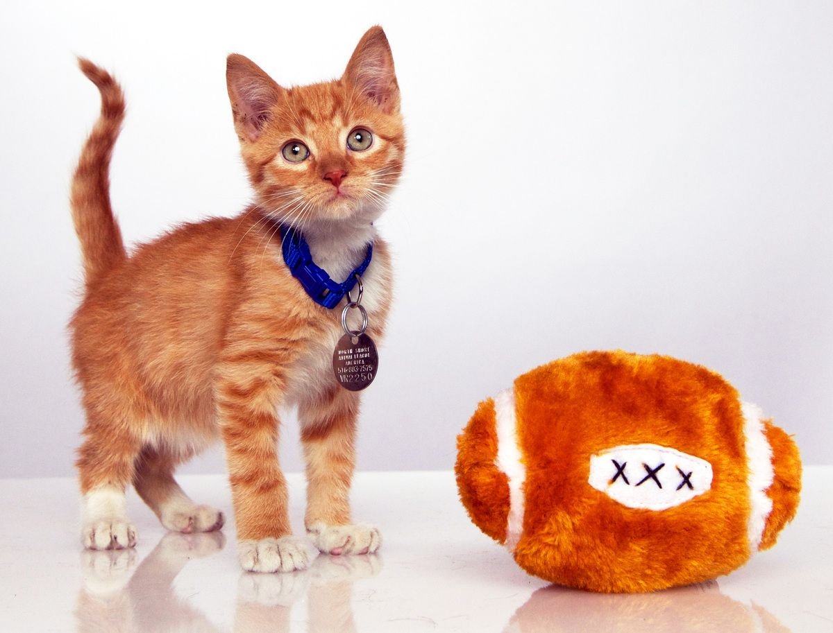 Here S A Sneak Peek Of The Adorableness To Come In The First Annual Kitten Bowl Kitten Bowls Puppy Bowls Kitten
