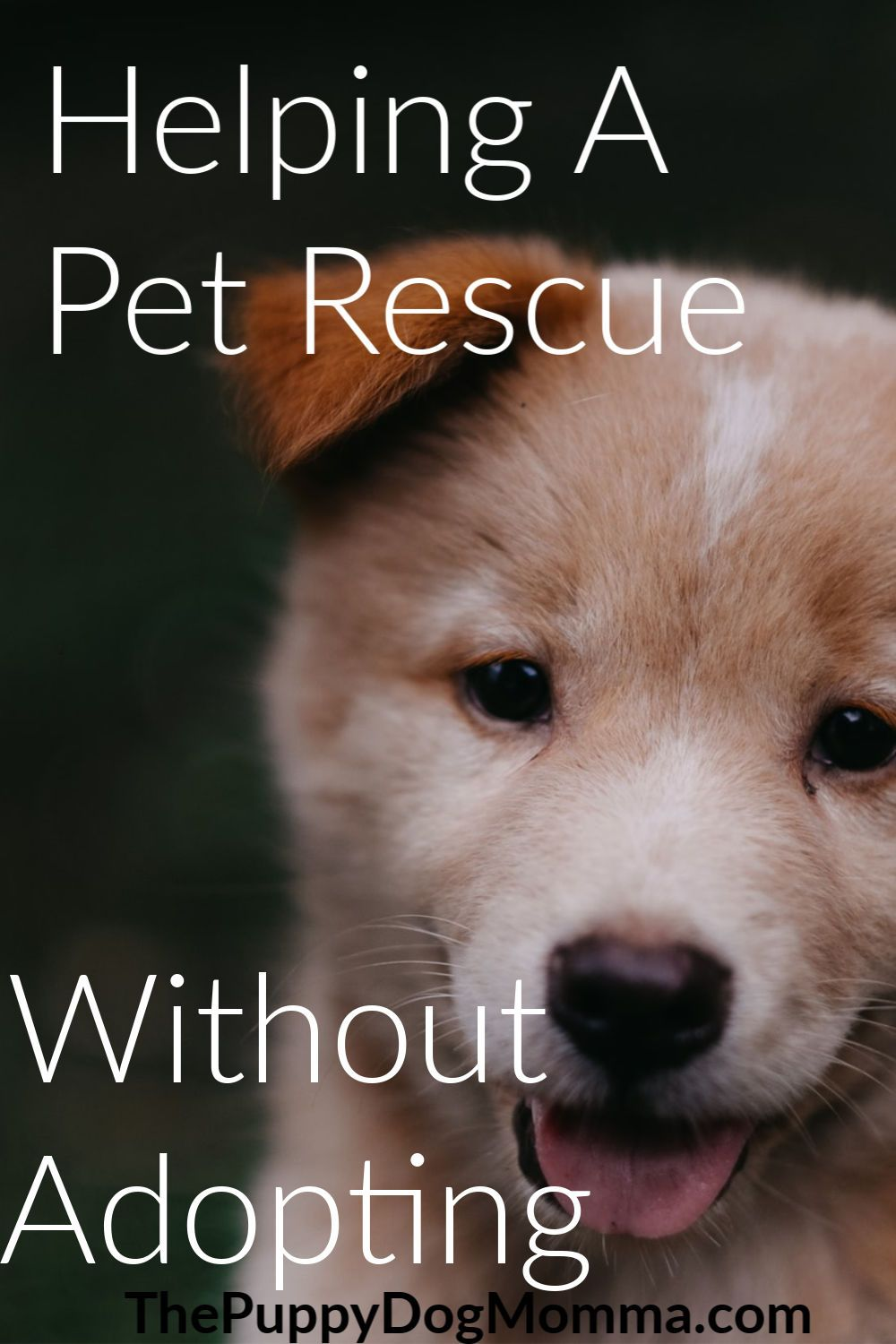 Tis' the season for giving and those pets in shelters need