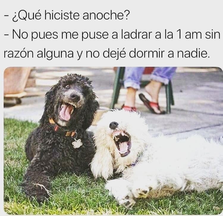 Todos Los Perros Siempre Humor Meme Funny Jaja Lol Dogs Amantedeletras Frasesenespanol Frase Memes De Perros Chistosos Perros Graciosos Memes Perros