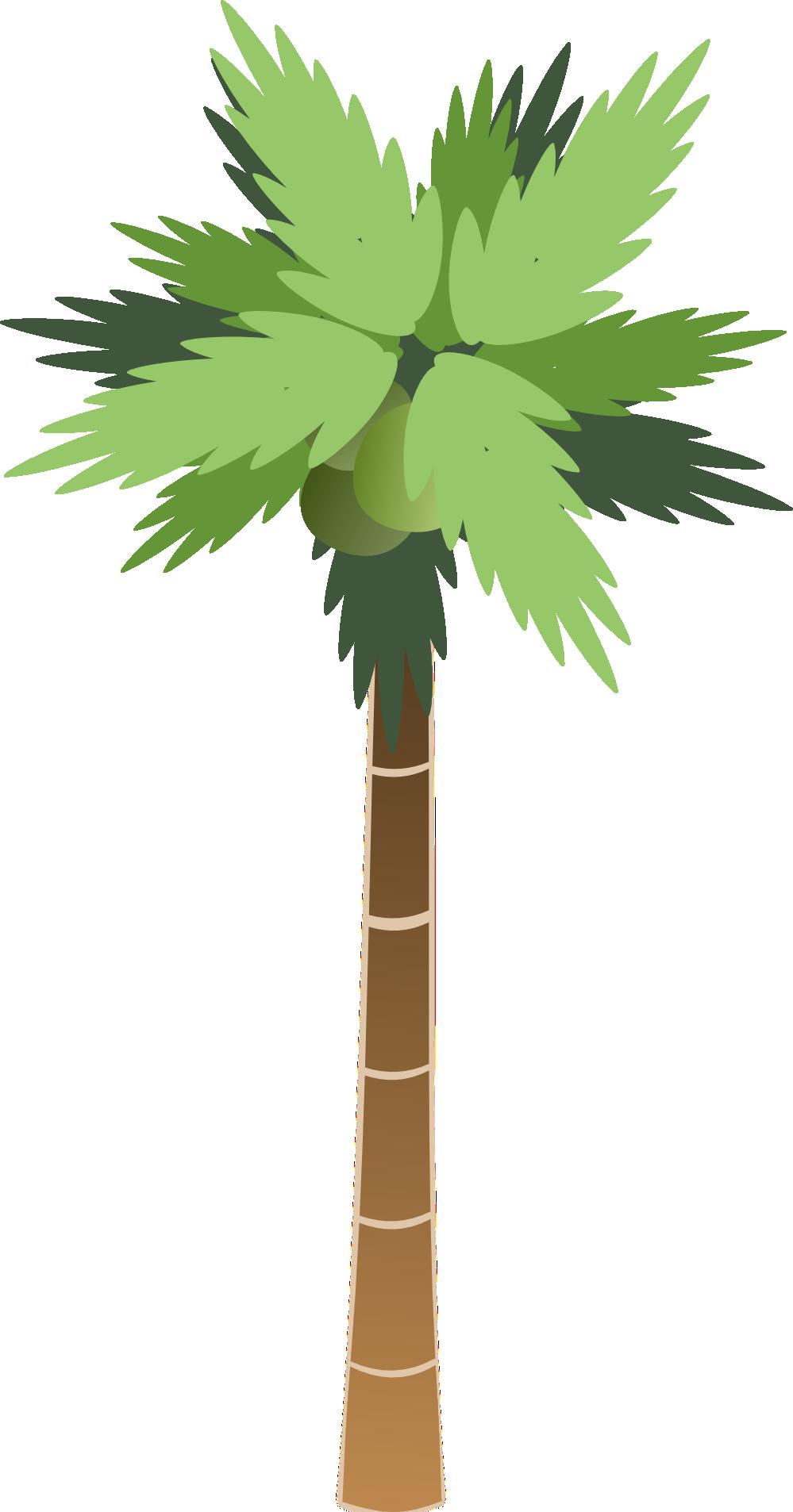Qcbayqagi Png 999 1906 Palm Tree Clip Art Palm Tree Png Coconut Palm Tree