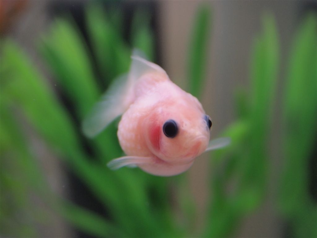 Goldfish ohmygoodness is it just the idea of gold i for Toddler fish tank
