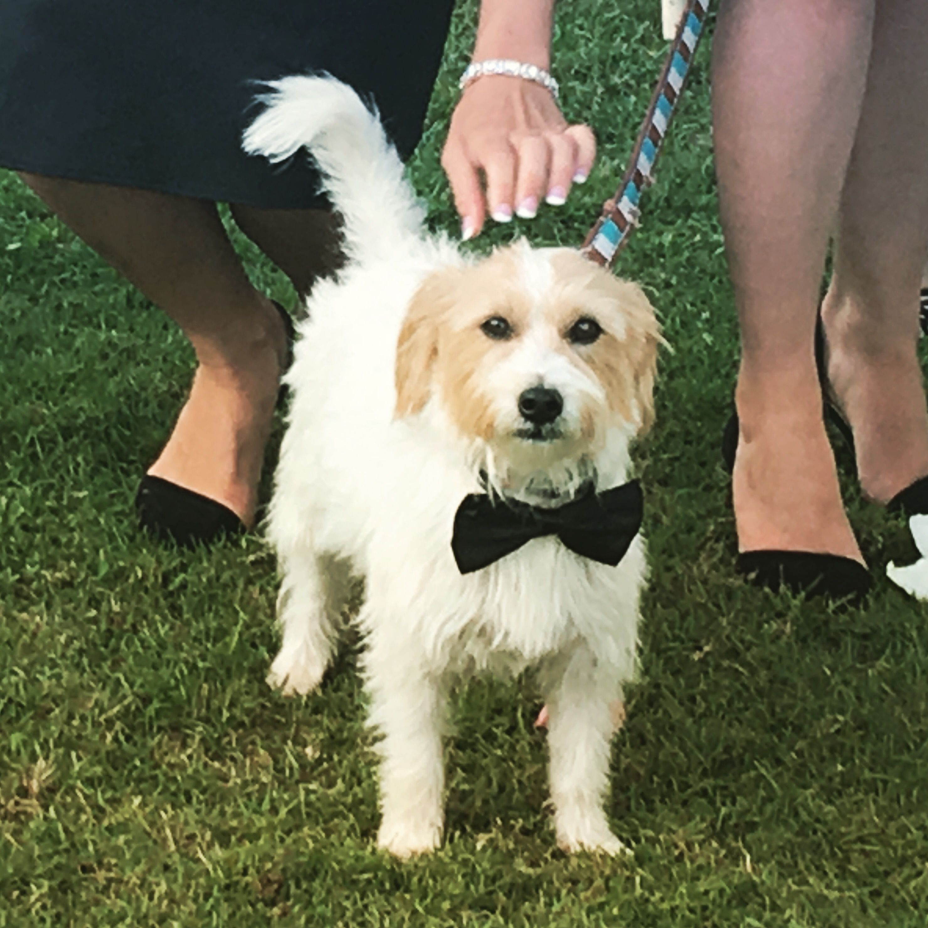 Ollie the fur doggy ring bearer at @Flaxtongardens .. we fell in love. <3 Suzanne Riley Marriage Celebrant Sunshine Coast