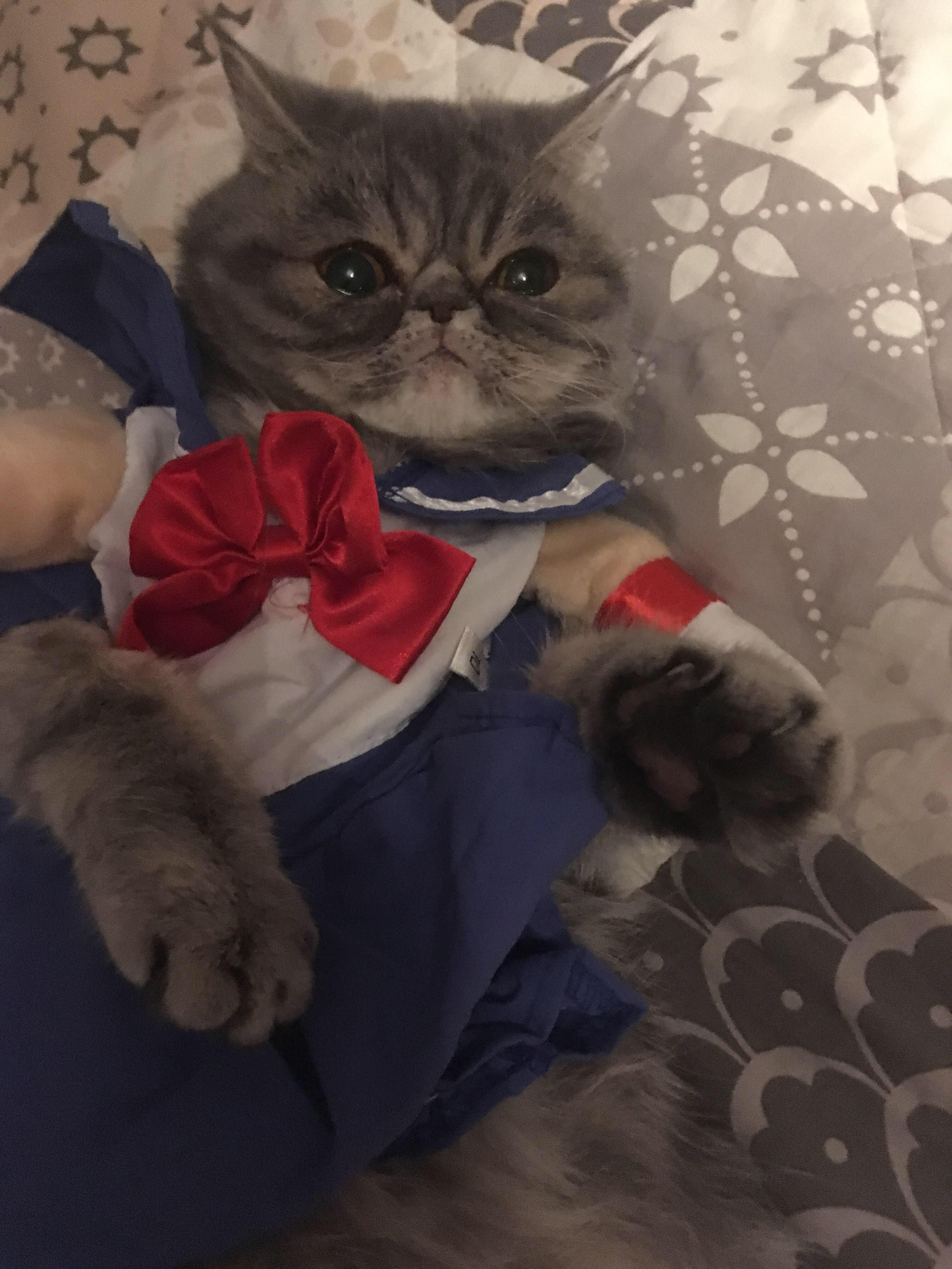 Hi Reddit Here Is My Cat In Sailor Moon Costume She Is Not Crying I Promise Sailor Moon Cat Sailor Moon Costume Moon Costume