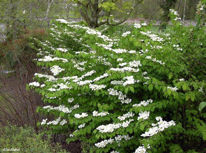 des arbustes originaux pour mon jardin elle dcoration - Arbuste De Decoration Exterieure