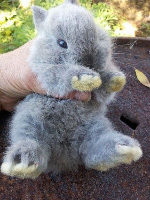 #bunny  #companion  #Cute  #extremely  #Family  #furry  #pet  #simple #looking #furry For those who are looking for a furry companion that is not just extremely cute, but simple to keep, then look no further than a family pet bunny. -