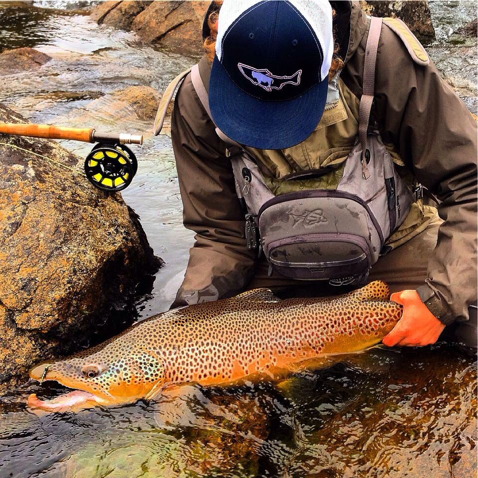 One of the most incredible brown trout on the fly I have ever seen.