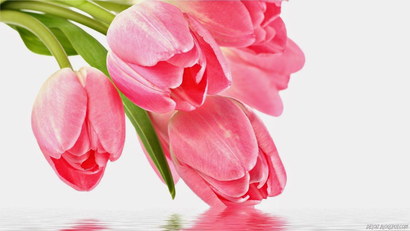 Wallpaper Foto Dan Gambar Bunga Cantik Untuk Laptop Wallpaper