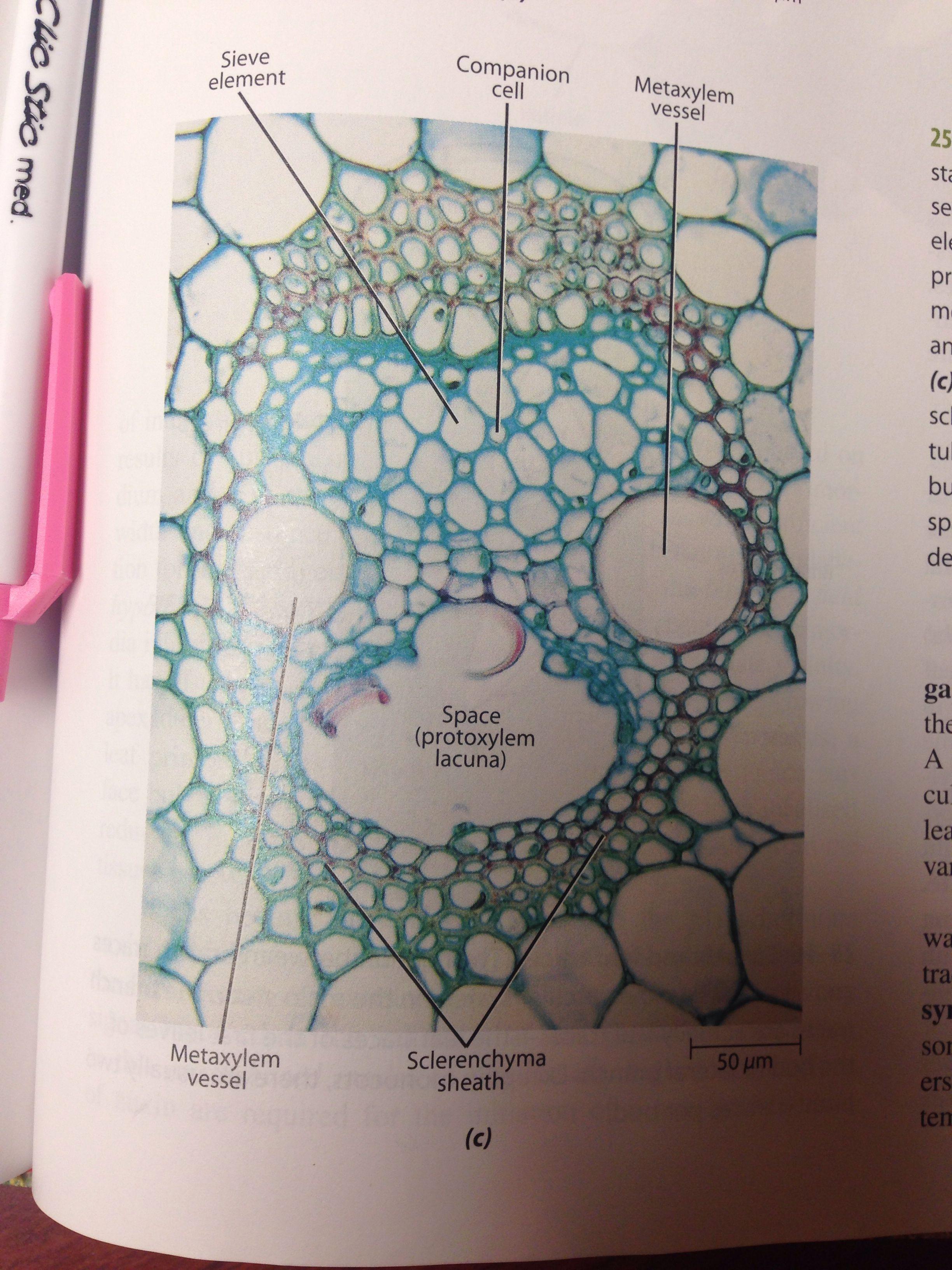 Pin On Something To Know Botany [ 3264 x 2448 Pixel ]